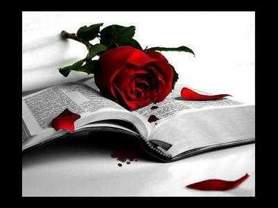 rosa-en-el-libro